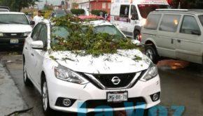 arbol cae en auto (3)